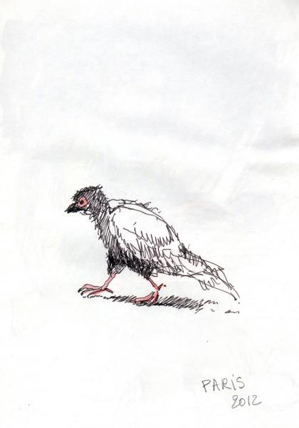 2012-17-Pigeon-paris.
