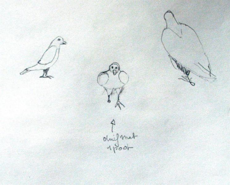 2007-parijs-duif-met-1-poot
