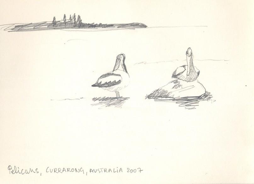 2007-pelicans-currarong-Aus-1