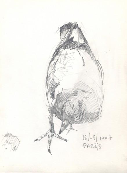 2007-voorstudie-duif-parijs1