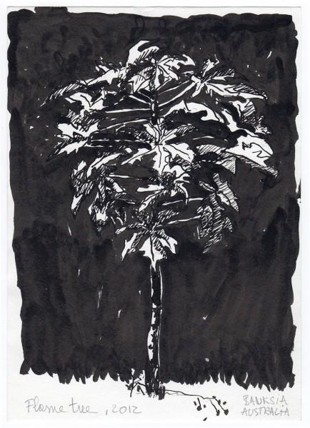 2012-24-flame-tree-australia-inkt-2