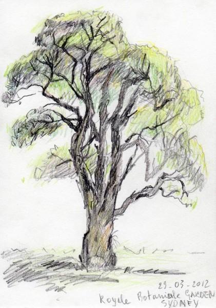 2012-Royale-Botanicale-garden-sydney