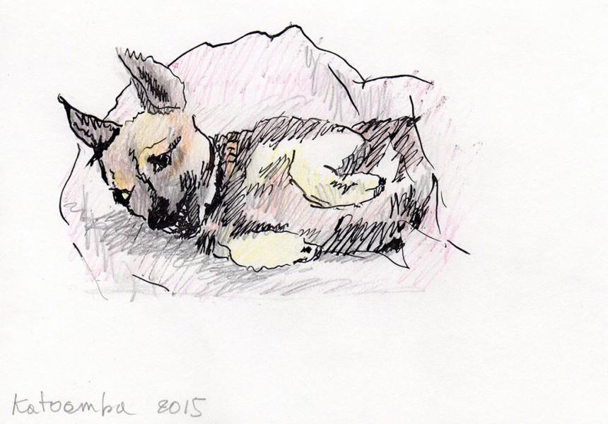 2015-littlewolf-Katoomba-Australia