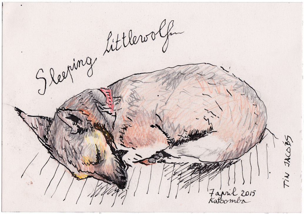 2015-sleeping-littlewolf